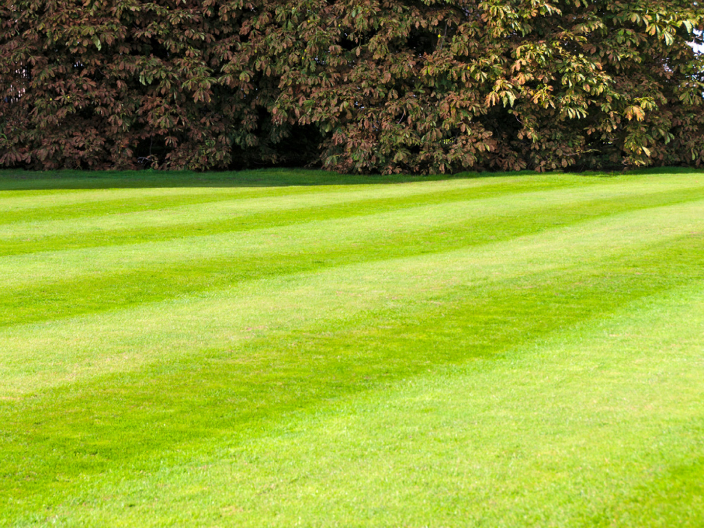 Blades Lawn Care Company Cuts Grass, Not Corners